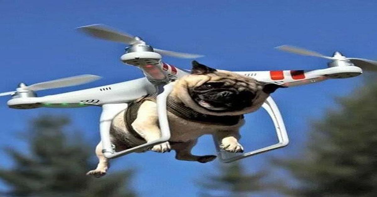 Avdeo Drone Farkı ile Komik Drone Videoları